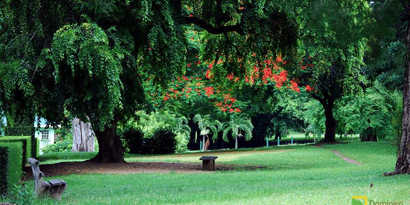 Botanical Garden Dominica